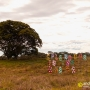Splendour in the Grass (Byron Bay, July 2015)